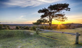 Sunset at Bratley View in the New Forest — Stock Photo