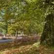 Autumn in the New Forest — Stock Photo