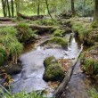 Forest Stream — Stock Photo #33283431
