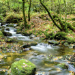 Dartmoor Stream — Stock Photo