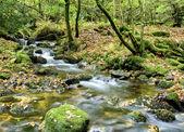 Dartmoor Stream — Stock Photo