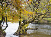 Autumn on the River Fowey — Stock Photo
