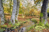 New forest — Stockfoto