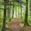 Woodland Path — Stock Photo