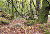 Ancient Woodland — Stock Photo