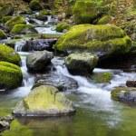 Mountain river — Stock Photo #51570147