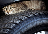 Cat on tire — Stock Photo