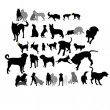 Set of dogs in interaction — Imagen vectorial