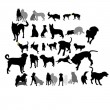 Set of dogs in interaction — Vector de stock #19449411