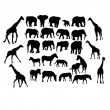 Set of safari animals - Stock Vector