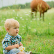 Boy in a field of daisies on a background of a cow — ストック写真