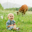 Stock Photo: Boy in field of daisies on background of cow