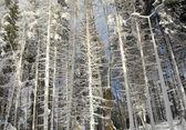 Inverno cárpatos — Foto Stock