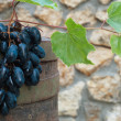 Wine barrel and grape vine — Stock Photo