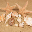 Sea shells with sand — Stock Photo
