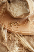 Wheat & Meal — Stock Photo