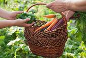 Komkommers en wortelen — Stockfoto