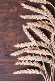 Wheat background — Stock Photo