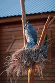 Decorative nest with an owl and cobwebs — Photo