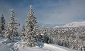 Winter in the mountains 006 — Stock Photo