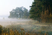 Autumn morning by a woodside — Stock Photo