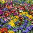 Carpet of flowers — Stock Photo