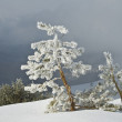 Frost trees — Stock Photo
