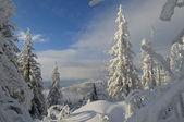 Día de invierno majestuoso — Foto de Stock