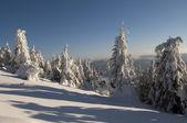 Mountains, forest, snow — Stock Photo