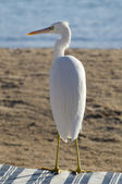 Heron on the beach — Stock Photo