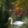 Autumn landscape with a swan — Stock Photo
