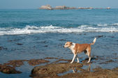 Dog living near the ocean — Стоковое фото