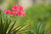 Pink flower& green background — Stock Photo