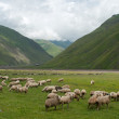 Sheeps in mountains — Stock Photo #40167057