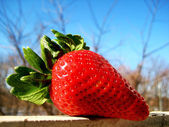 Strawberry on the window — Stock Photo