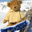 Bear with snowbord — Stock Photo
