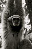 Mono en el árbol — Foto de Stock