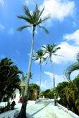 Palm en hemel — Stockfoto