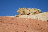 Roca con forma de conejo — Foto de Stock