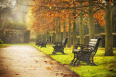 Benches in autumn park — Stock Photo