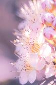 цветы в летнее время — Стоковое фото