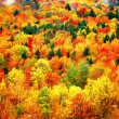 Autumn mountain view at cats kill mountain — Stock Photo