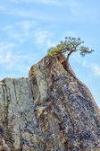 Lone pine tree in sandstone pinnacle — Stock Photo