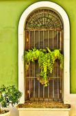 Ornate metal screen door with lacy plant — Stock Photo
