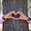 Stock Photo: Hands making heart shape on trunk of tree.