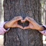 bir ağaç gövdesinde bir kalp şekil verme eller — Stok fotoğraf