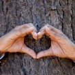 Hands making an heart shape on a trunk of a tree. — Stock Photo
