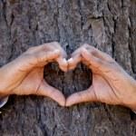 χέρια, καθιστώντας ένα σχήμα καρδιάς σε ένα κορμό ενός δέντρου — Φωτογραφία Αρχείου
