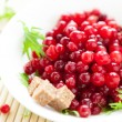 Fresh cranberries in a white bowl — Stock Photo
