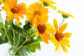 Yellow marigolds in transparent vase — Stock Photo